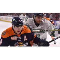 Greenville Swamp Rabbits vs. the Florida Everblades